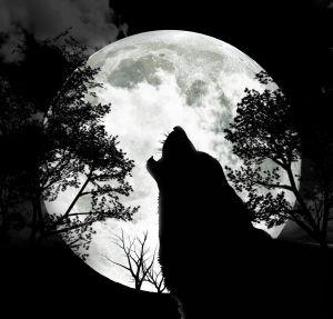 איך זאב בודד נפתח אל העולם – חלק א